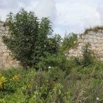 Rakowice Wielkie ruiny wieży rycerskiej